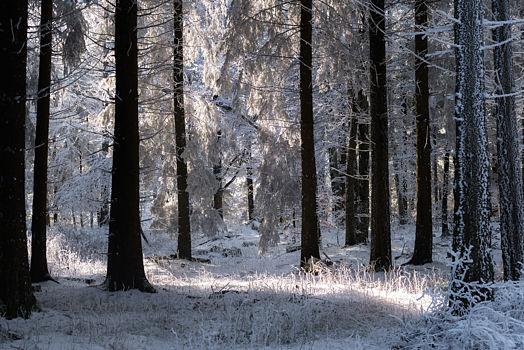 Forêt de Lente