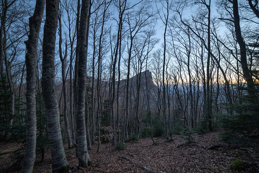 Les 3 Becs à travers la forêt