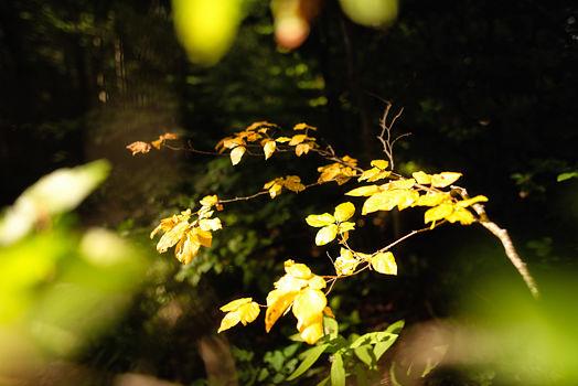 Prémices de l'automne