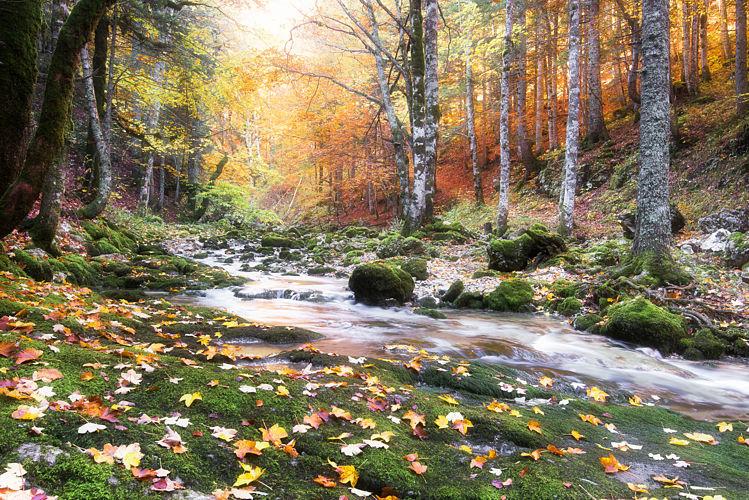 Couleurs d'automne sur le ruisseau du Brudour
