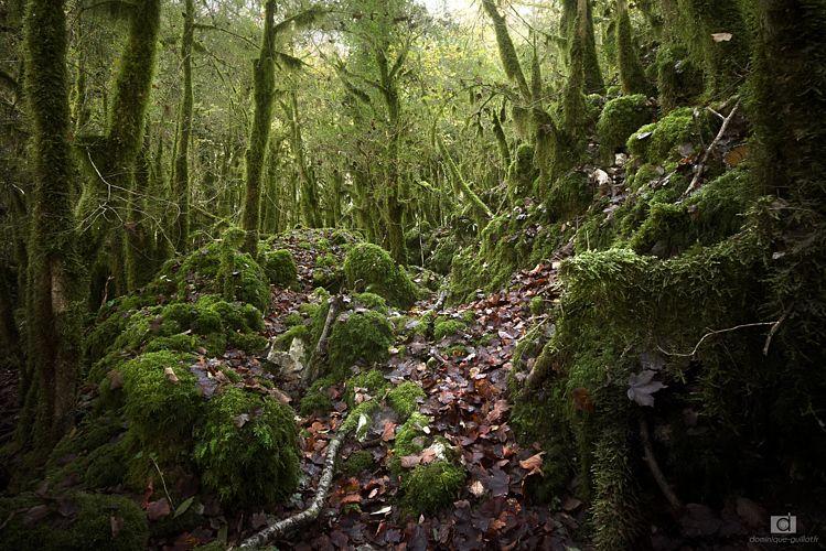 Forêt de mousse