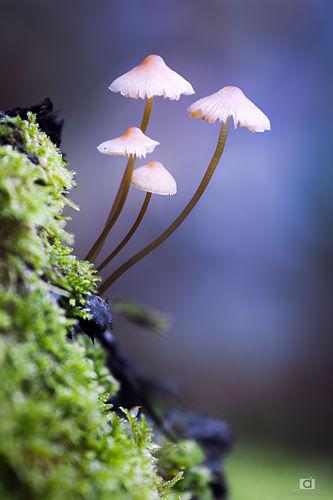 La famille champignon