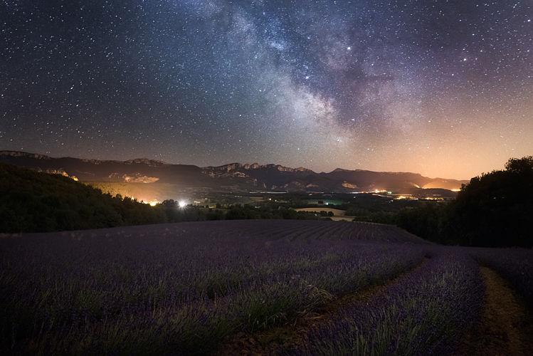 Lavandes sous les étoiles