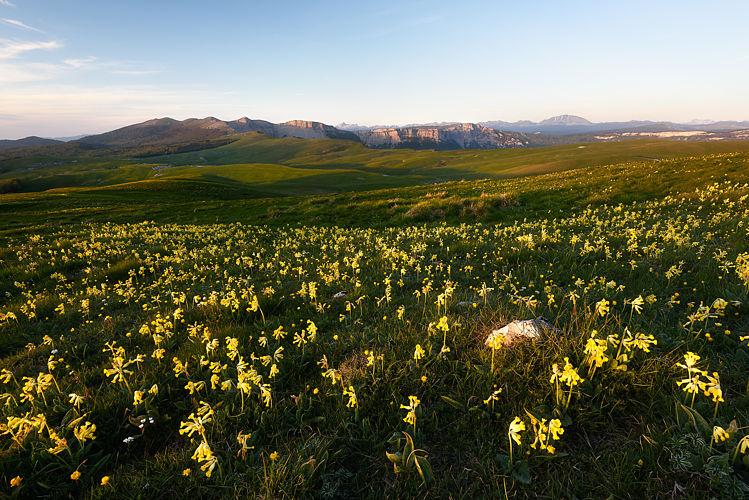 Plateau d'Ambel en fleur