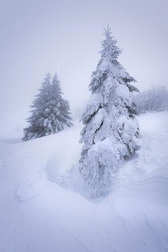 Figés dans la neige