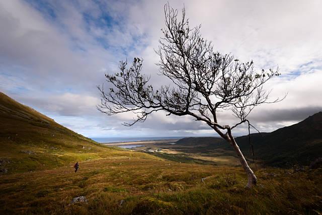 Un arbre solitaire