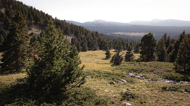 Hauts plateau du vercors